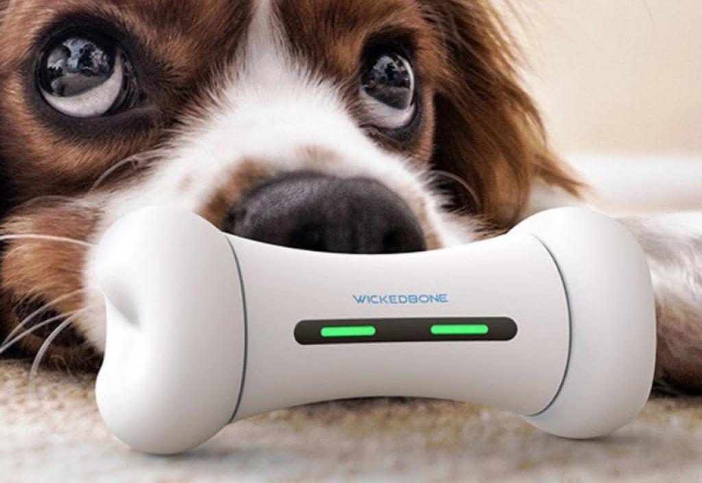 Best Dog Gadgets
